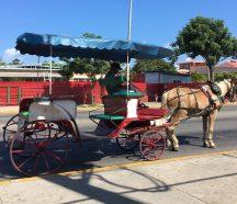 Horse Taxi